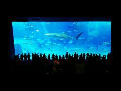 悠々と泳ぐジンベエザメに圧巻!